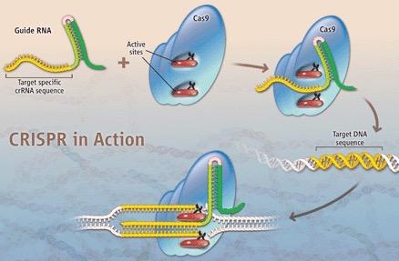 CRISPR fig1