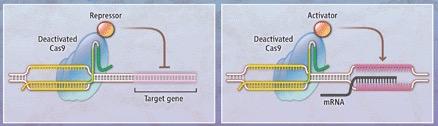 CRISPR fig2