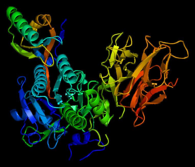 Protein_PCSK9_PDB_2p4e