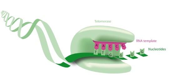 invectys telomerase