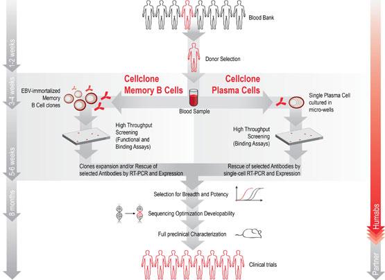 humabs_cellclone_mab_antibody
