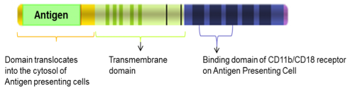 Schematic diagram of a Vaxiclase-based vaccine. Source: Genticel