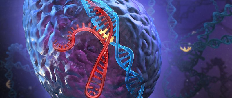DNA_CRSIPR-Cas9
