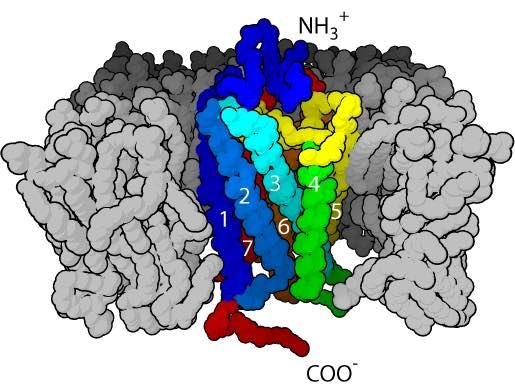 GPCR 3D structure