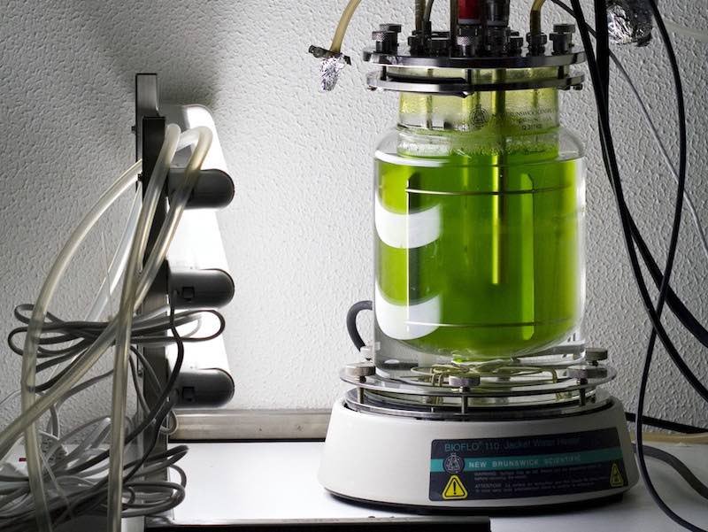 bioreactor industrial biotech