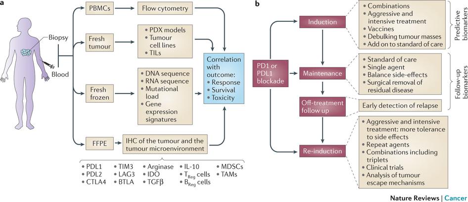 biomarkers_immunooncology_pdl1_cancer_tissue_samples_biopsy