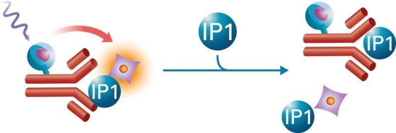 IPone assay format_IP1-format