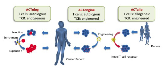 The 3 ACT Approaches Immatics US plans to implement into its clinic using XPRESIDENT Tumap detection and MD Anderson's ACT expertise. S: Immatics