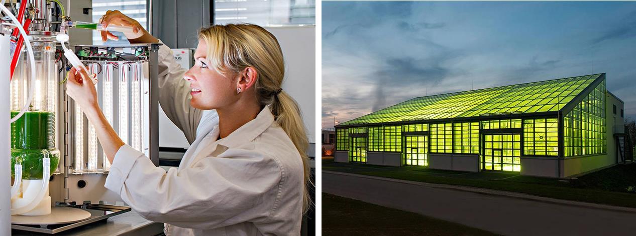 Student Olga Shostak at the LED-bioreactor (Source: Andreas Heddergott / TUM)