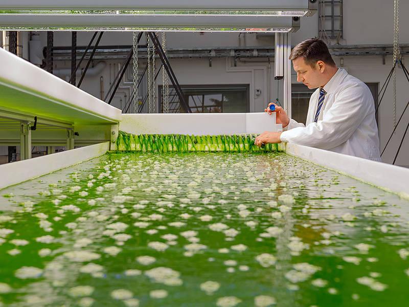 Professor Brück in the new AlgaeTec facility (Source: Andreas Heddergott / TUM)