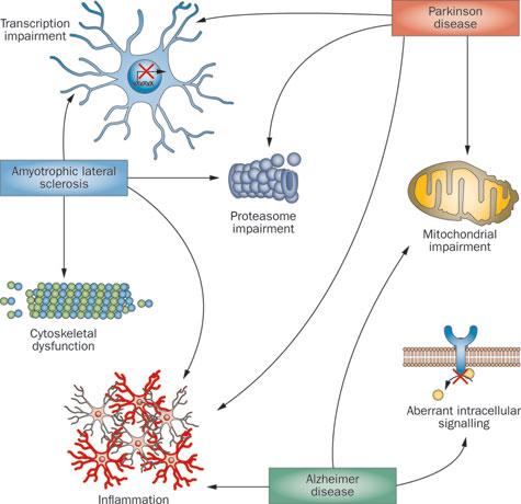 Gene cross-over in Neurodegenerative disease is poorly understood in Parkinson's, Alzheimer's and