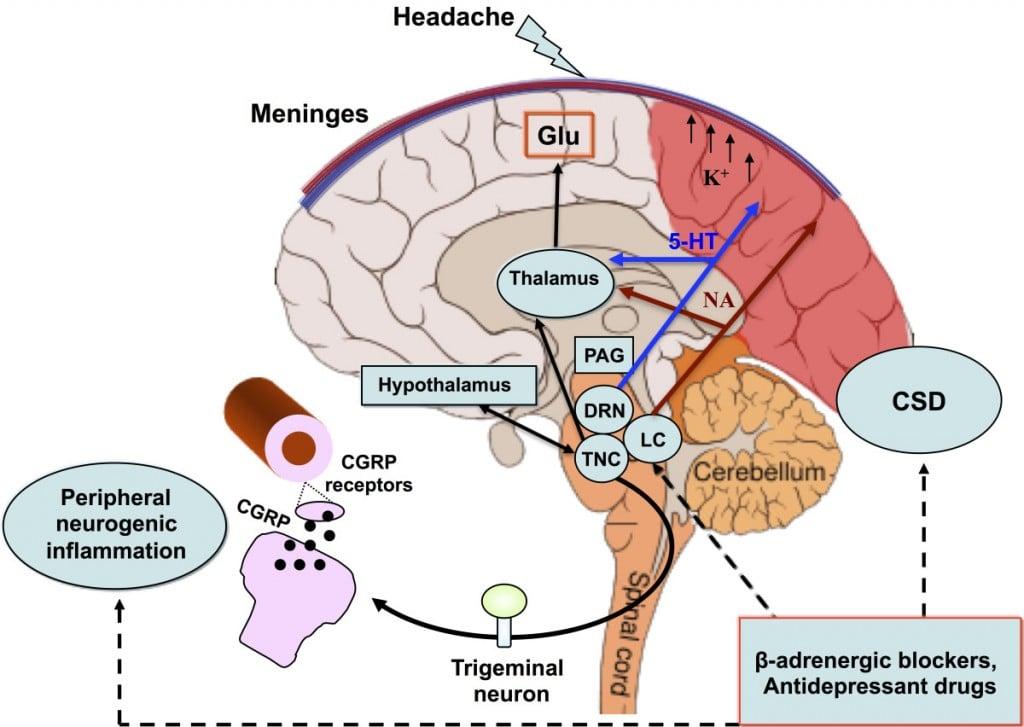 cgrp_inhibitors_teva_heptares_migraines