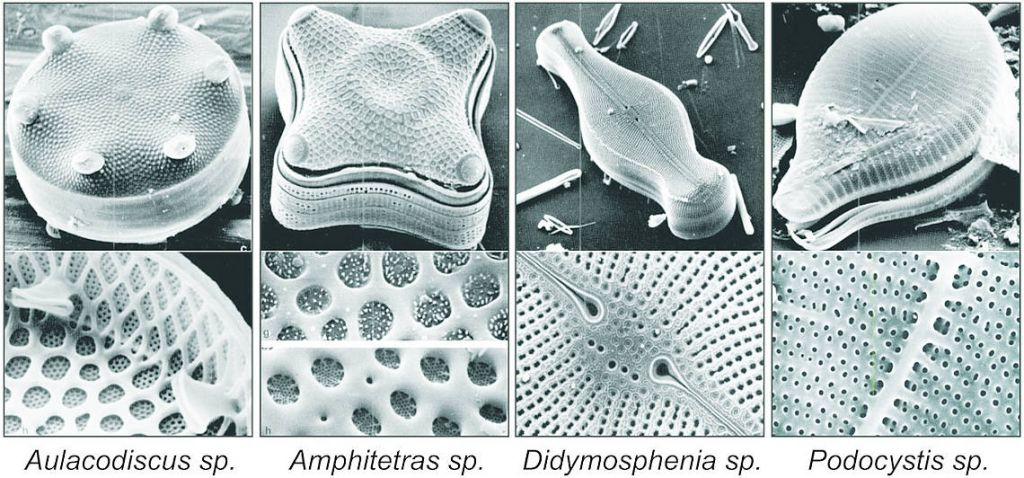 Scanning Electron Micrographs of some Diatom silica microstructures (Source: The Diatoms: Biology & Morphology of the Genera. Cambridge Univ. Press, 1990)