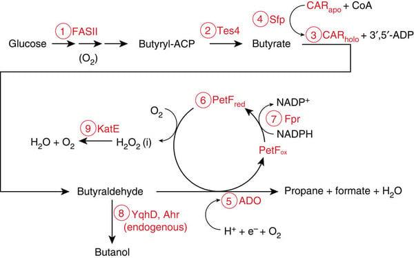 ecoli_car_propane_pathway_imperial_biofuels