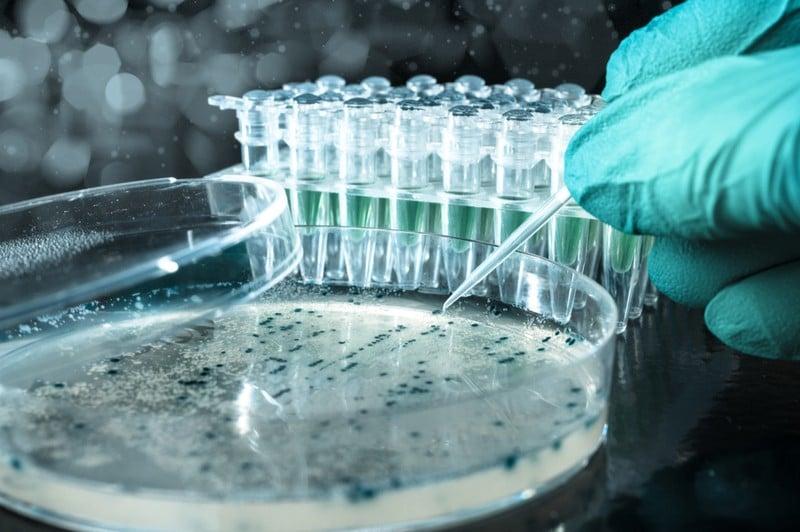 genentech history biotech genetic engineering cloning