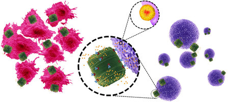 genetically-engineered-diatom-biosilica Genetically engineered diatom biosilica releases drug molecules in the immediate vicinity of the target cells. (Source: Delalat et. al 2015, Nature Communications, 6, 8791, doi: 10.1038/ncomms9791)