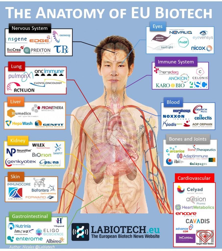 anatomy biotech infographic