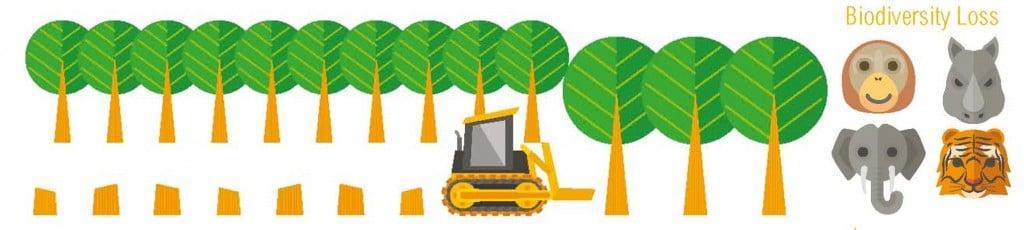 biodiversity_palm_oil_yeast_deforestation_bath_york