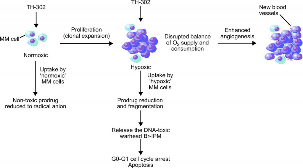 merck_hypoxia_threshold_evofosfamide_cancer