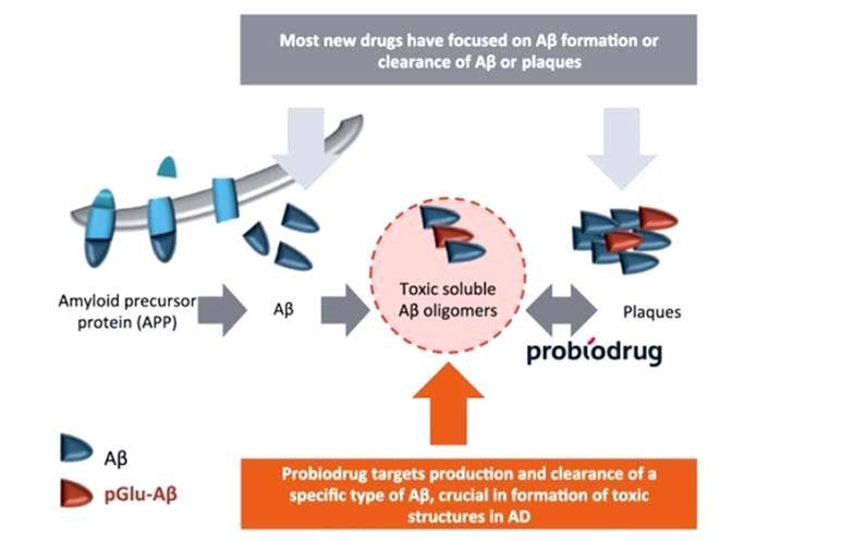probiodrug_alzheimer_disease_saphir_plaque_dementia