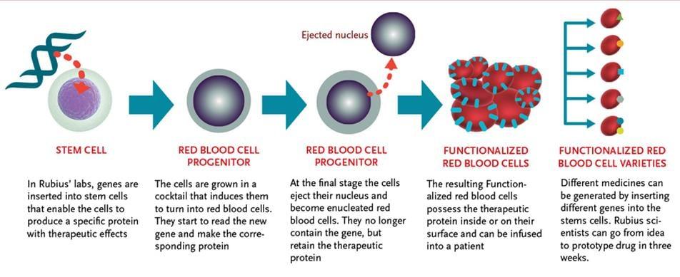 rubius_red_blood_Cells_flagship_venturelabs_rcts_pku