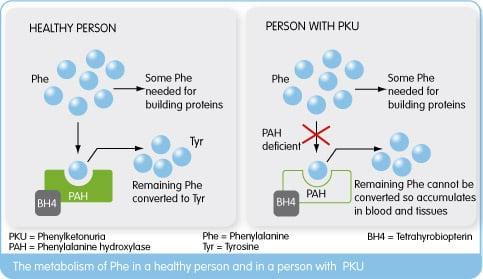 rubius_therapeutics_pku_red_blood_cells