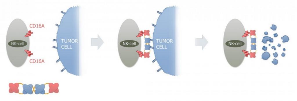 affimed_lymphoma_cancer_msd_merck_keytruda