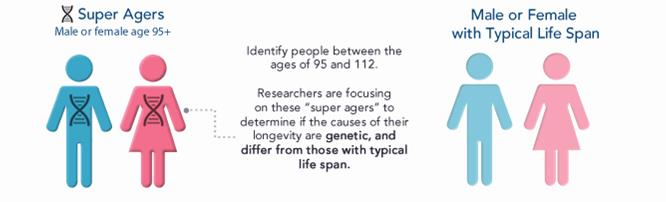 aging longevity einstein ny genes genomics study