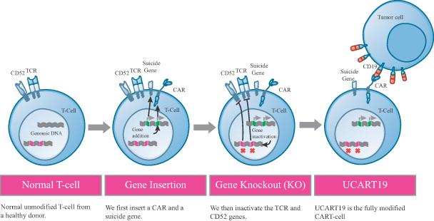 cellectis_pfizer_ucart19_servier_cancer_trial_uk_leukemia