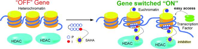 epigenetics_proteros_hdac1_rodin_biogen_neurological_disease