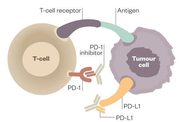 pdl1_immunooncology_cancer_ovarian_pfizer_merck