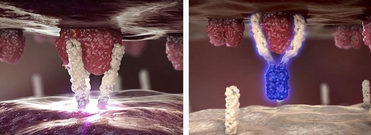 APG101_Apogenix_CD95_glioblastoma_cancermark