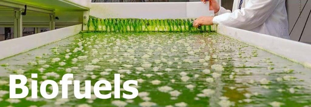 algae_industry_biotech_biofuels_microalgae_munich_TUM