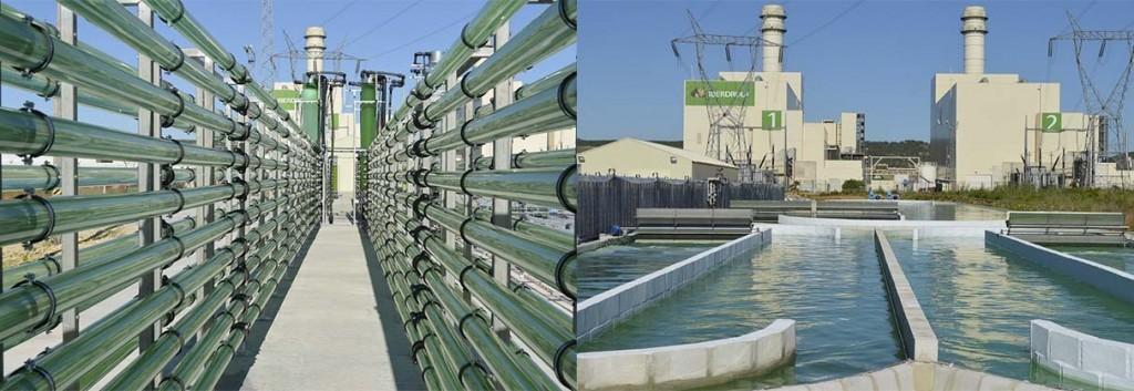 algaeenergy_algae_biofuels_aviation_raceway_review