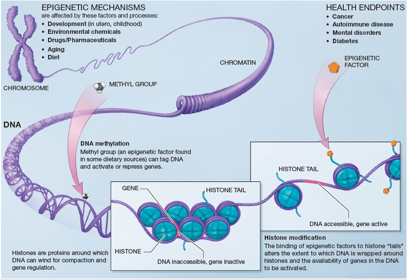 epigenetics_epigenome_crispr_desktop_genetics_imperial_ngs_illumina