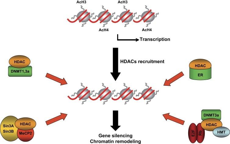 hdac histone deacetylase epigenetics resminostat 4sc biotech cancer liver hcc fda
