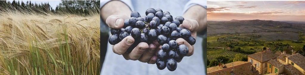 italian_agriculture_crea_gmo_cisgenesis_biotech