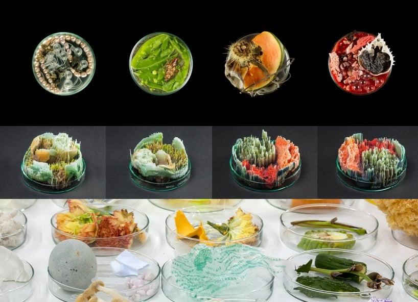 suzanne_anker_bioart_petri_vanitas_remote_sensing_rainbow_loom_3D_print