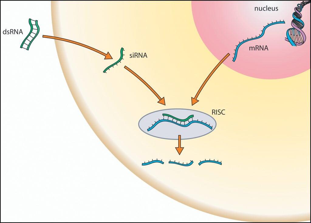RNAi_gene_therapy_genable_spark_therapeutics_rhonova_RHO