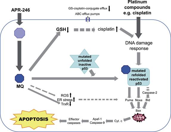 apr-246_aprea_ovarian_cancer_p53_protein_funding_versant_ventures_healthcap_5am_ventures_karolinska