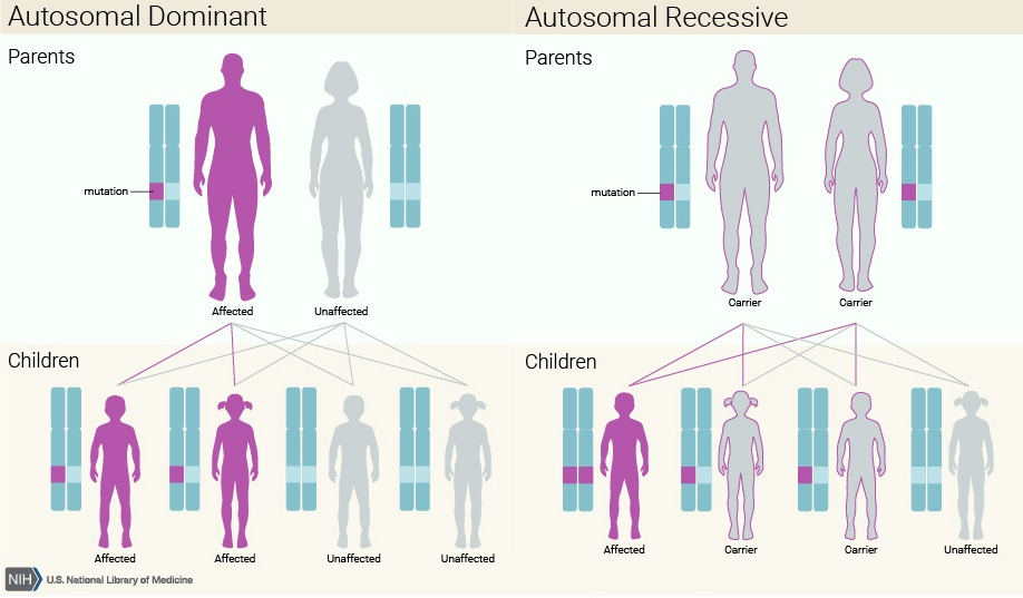 autosomal_dominant_inherited_retinal_dystrophies_ird_rho