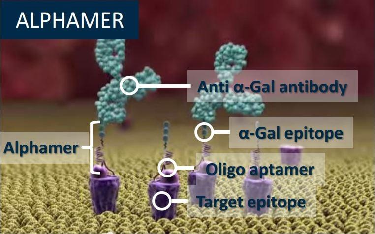 avvinity_alphamer_horizon_centauri_immuno_oncology_cancer