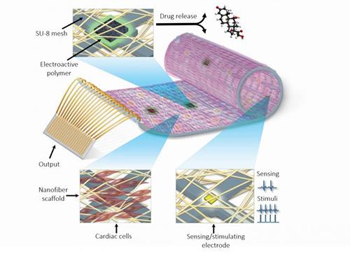 bionic_heart_patch_university_tel_aviv_tau_nanoelectronics_tissue_engineering_myocardial_infarction_heart_attack_nature_materials