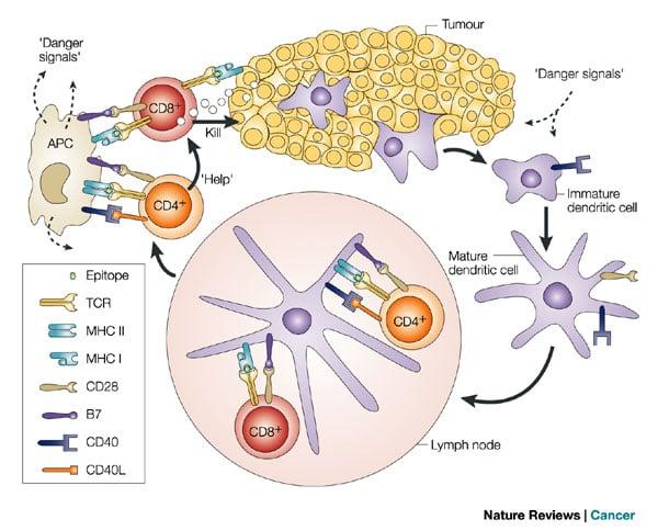 immuno-oncology_nature_reviews_cancer_250_immunotherapies_leiden_lumc_isa_pharmaceuticals