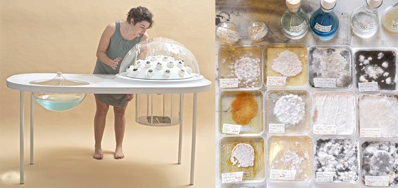 katharina_unger_julia_kaisinger_bioart_fungi_mutarium_design_geography_bioart