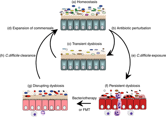 maat_microbiome_dysbiosis_microbiotherapy
