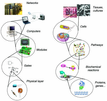 synthetic_biology_igem_indiebio_cork_university