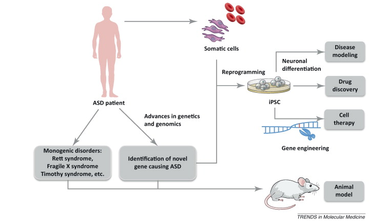 autism_asd_biotech_neurodevelopmental_pharma_fragile_x