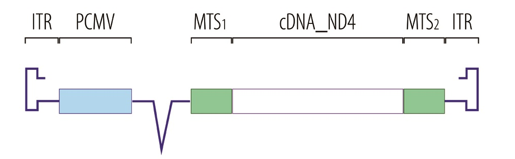 nd4_gene_aav2_therapy_Gs0s_gensight_LHON_blindness_biotech