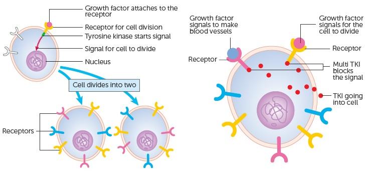 tki_tyrosine_kinase_lung_cancer_mirati